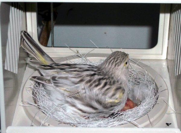 2014 breeding season