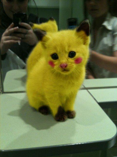 Un chat déguiser en pikachu