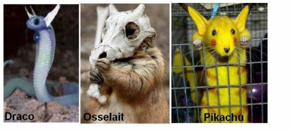 Quels animaux déguiser en Pokémon !