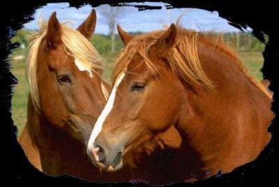 Deux chevaux amoureux blog de debochichi1999 - Coloriage chevaux grand galop ...