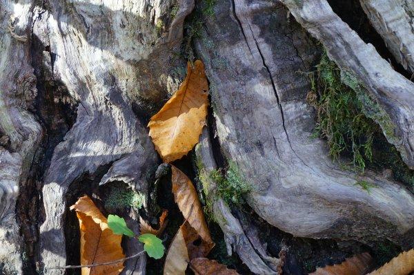 ~~~ Avant de devenir un chêne ce bel arbre fut un gland ~~~