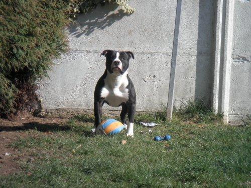 Il est beau mon chien....