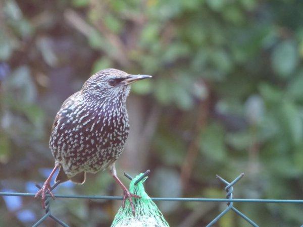 dans mon jardin ce matin