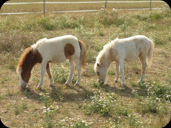 Destin à l'élevage