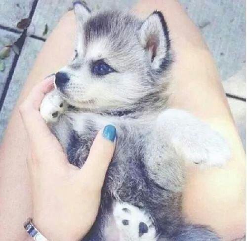 Je veux le meme chien !!