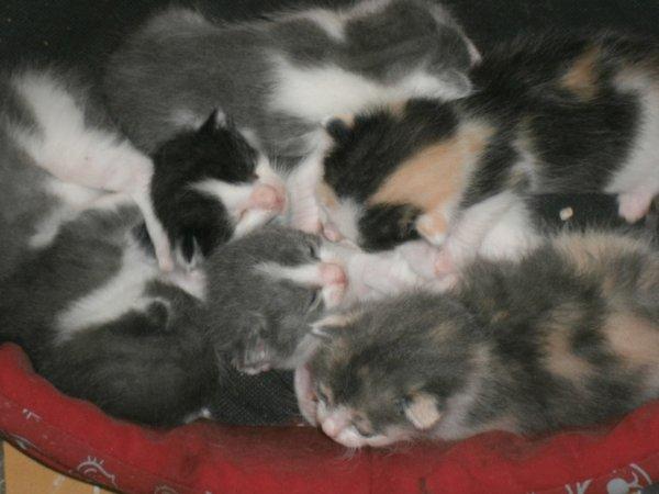 Mon chat minette et ses 6 petits adorables petit chaton :)