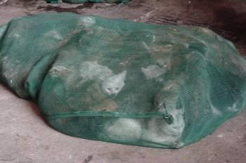 /!\ le massacre des chat et des chien en chine/!\