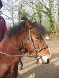 Photo de horse-juju