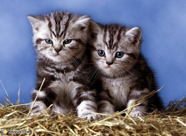 ...^^ Chats Duo (^^)