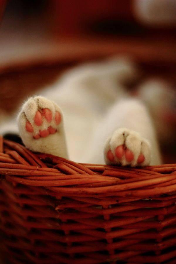 cats et compagnie