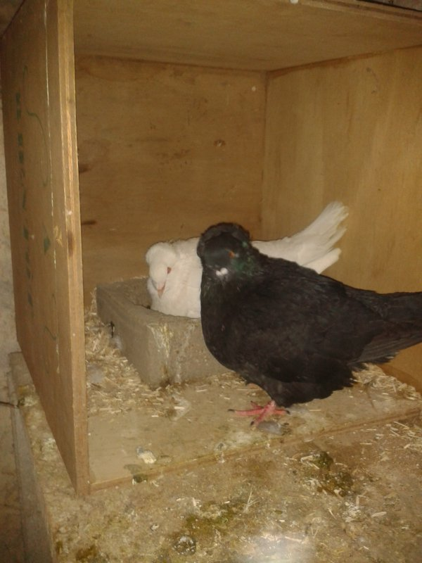 Nouveau couple et jeunes lapins