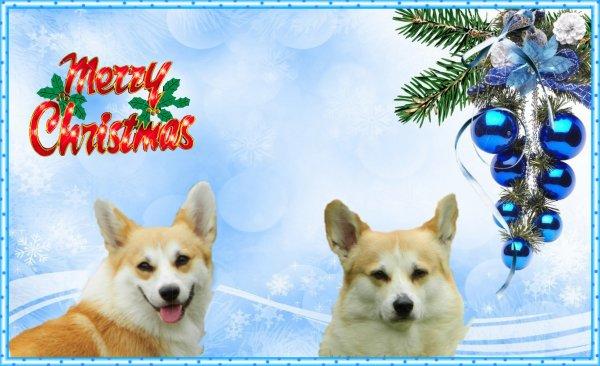 Noël arrive !  Coming up Xmas !