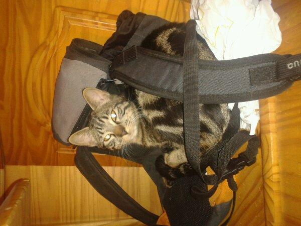 Catsy avec son sac d'ecole