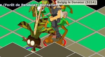 Mr Bulgig le Danseur est demandé!