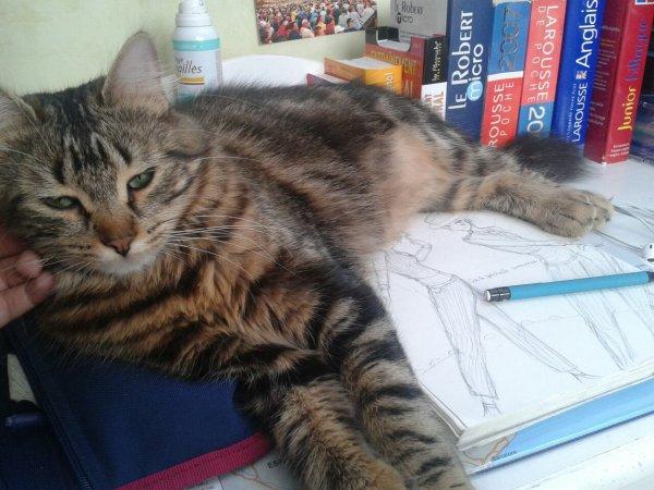 Mon chat qui prend un peu de place... ==