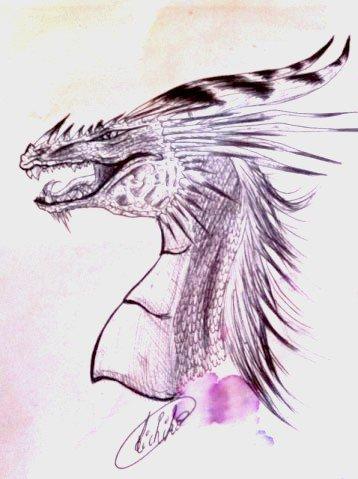 ★ Croquis Dragon ★