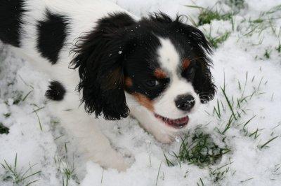 5 cm de neige pour les 5 mois de mon filou d'amour.