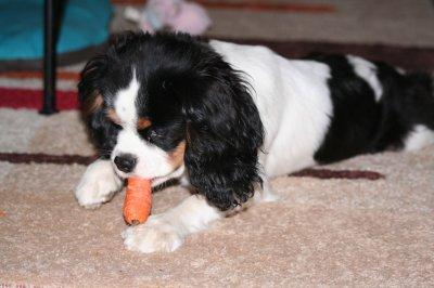 mon bébé mangeur de carottes!