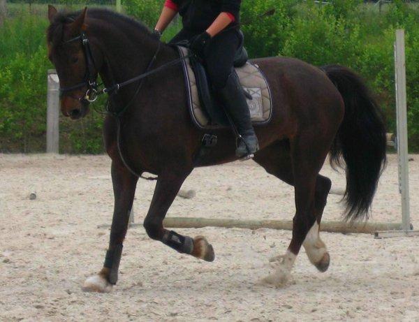 """Parce que ce """"juste un cheval"""" m'apporte plus que n'importe qui d'autre !"""