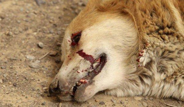 URGENT : signer la pétition contre l'abattage des chiens érrant en Haute Marne et Haub !!!