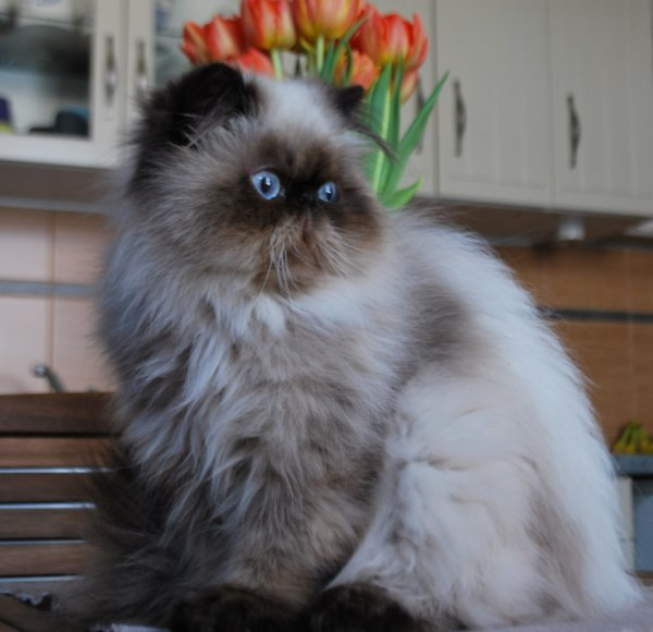 un amour de chat !!!