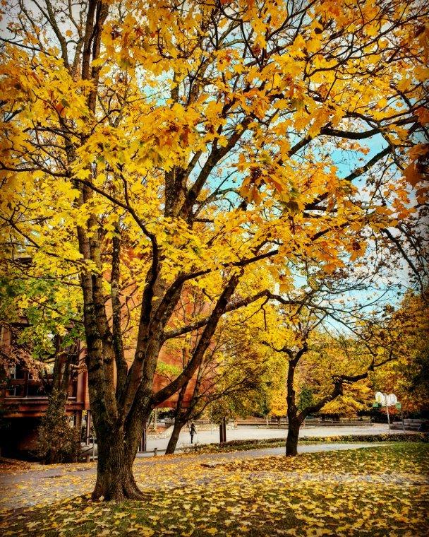 ~L'automne~