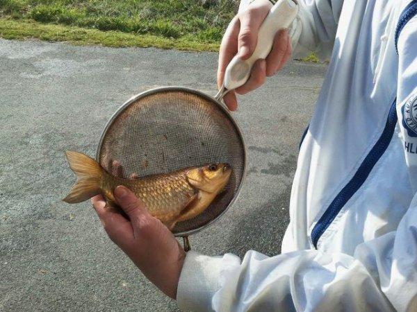quelques poissons pendant la fermeture