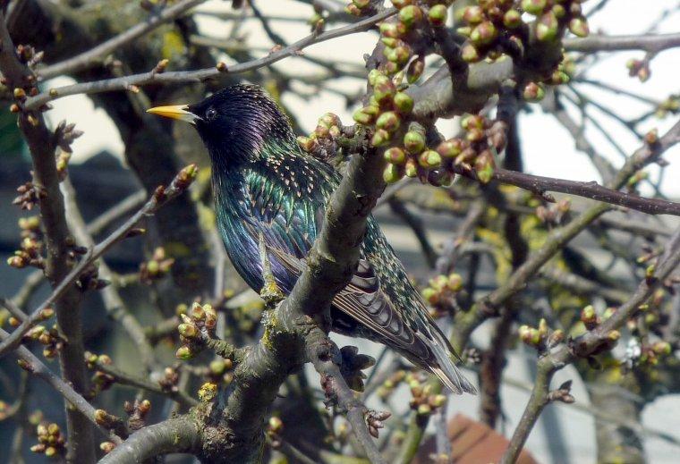 En ouvrant ma fenêtre ce midi, j'ai vu cet oiseau, qui peux m'aider , quel est son nom?