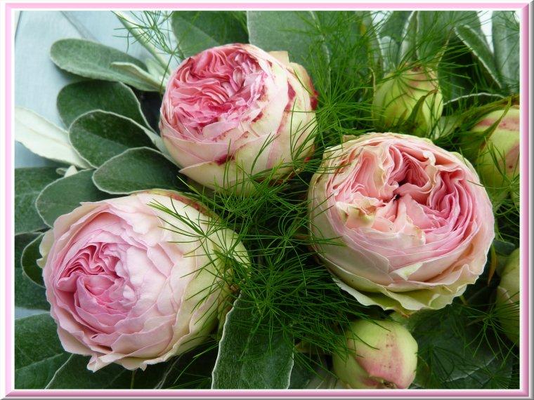 Je vous souhaite un excellent week-end avec les premières roses du jardin