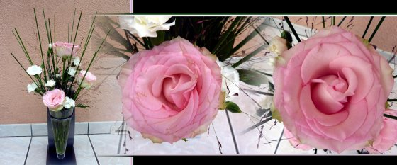 Merci pour ces roses, elles sont magnifiques