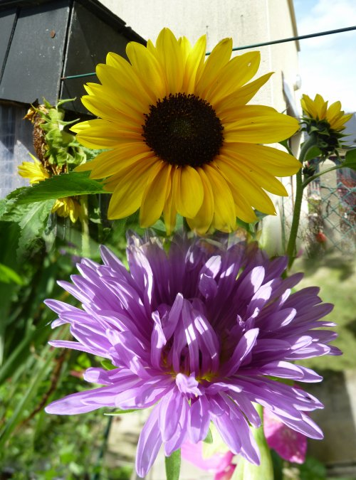 Petit tour au jardin pour admirer les fleurs
