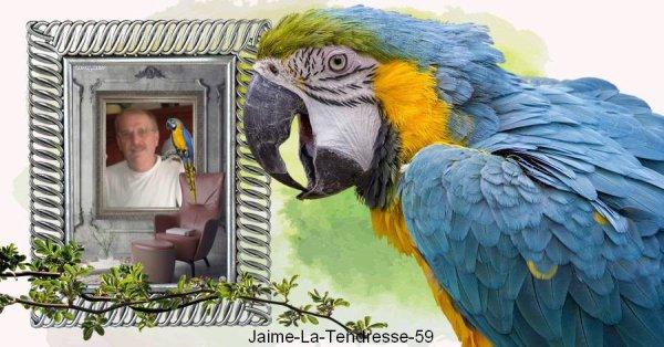 Magnifique cadeau de mon amie Jaime-La-Tendresse