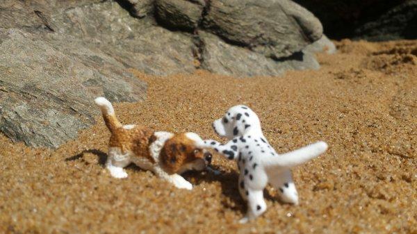 Mini shooting à la plage