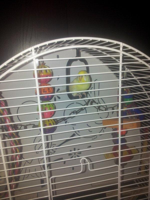 Filou et Fifi dans leurs cage sage.