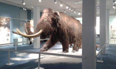 Muséum d'Histoire Naturelle de Tours