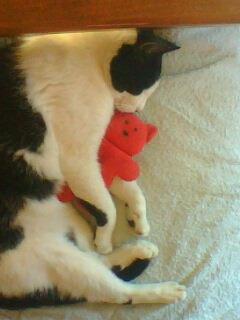sa c mon chat qui fais dodo avec son doudou