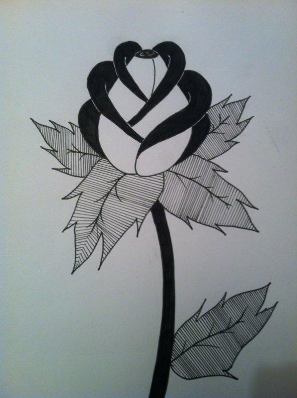 Ma rose