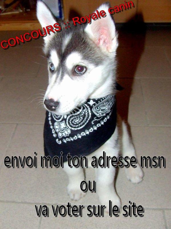 concour royal canin :: bonjour les amis voila j'ai encore un service a vous demander ????