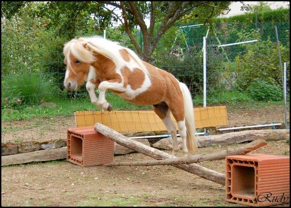 Séance de saut pour les minis