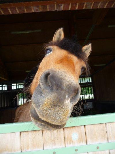 Un poney ?, LE poney ♥