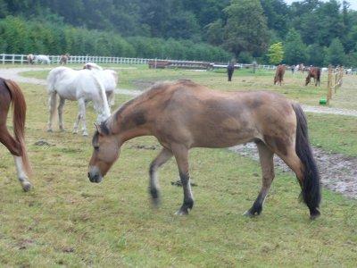 Petit Poney, tu es tout beau et tout petit, petit poney .. ♥