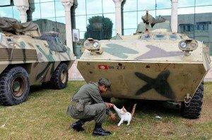 Les militaires tunisiens et les animaux