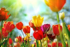 Chap 12 *La saison des fleurs*