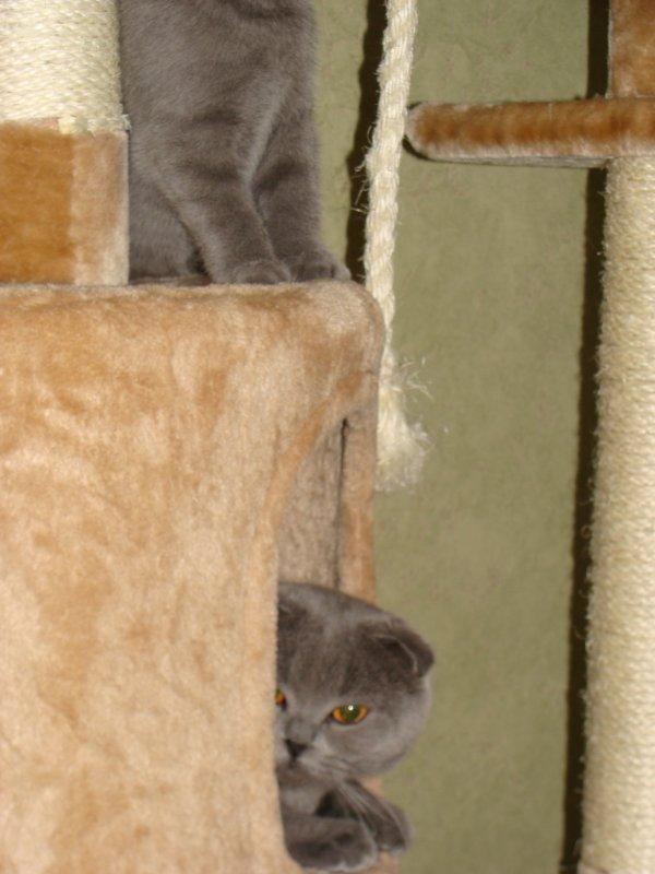 Glycine enfin sortie de la cachette de l'arbre à chat