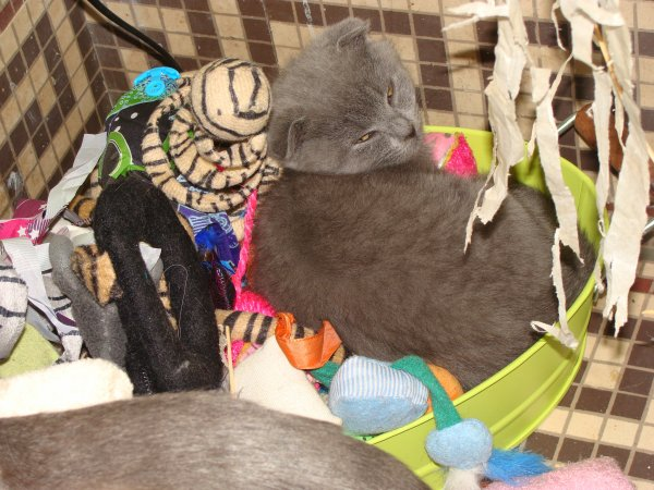 Miss Hannah, en plein repos dans le bac à jouets pour chats au pied du chauffage