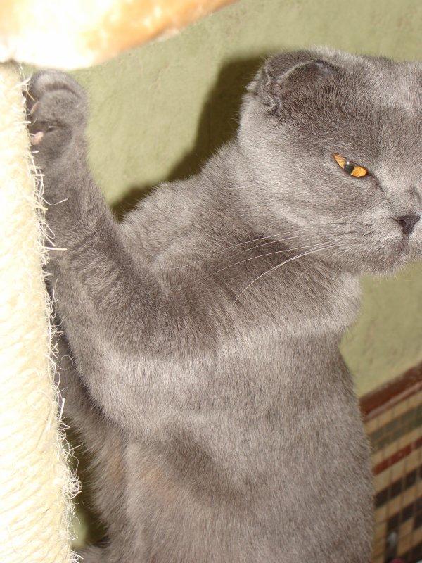 Glycine montre l'exemple , on fait ses griffes sur l'arbre les chatons et on écoute !!