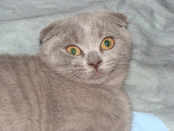 princesse Hiris, a son refuge dans le fond du lit de ma fille , mmmmh petite comique