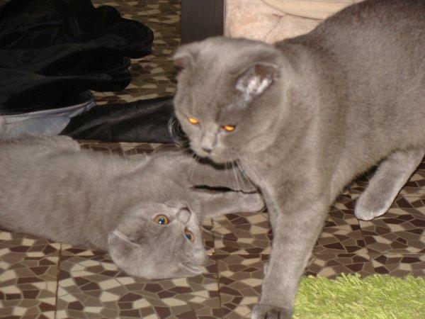 jeu entre mère et fille, celà finit toujours par un gros bizou !