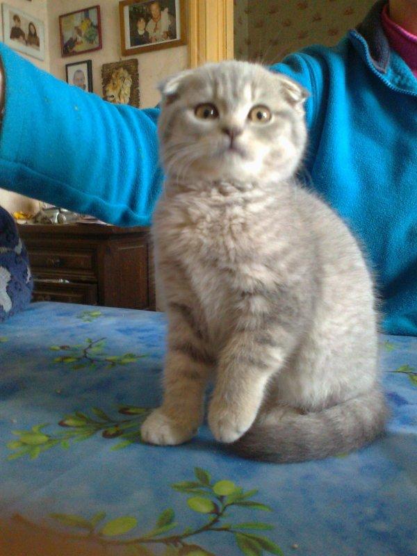 Hisis , prise en photo lors de  ma visite chez mon amie Isa,