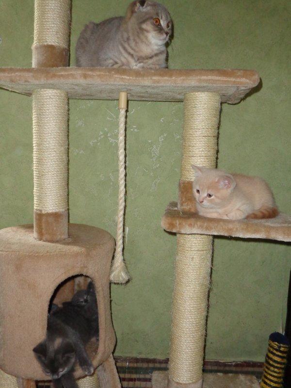 autour de l'arbre à chats... hisis et ses copains chatons